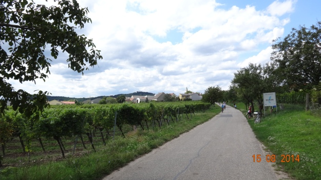 cycling through the vines