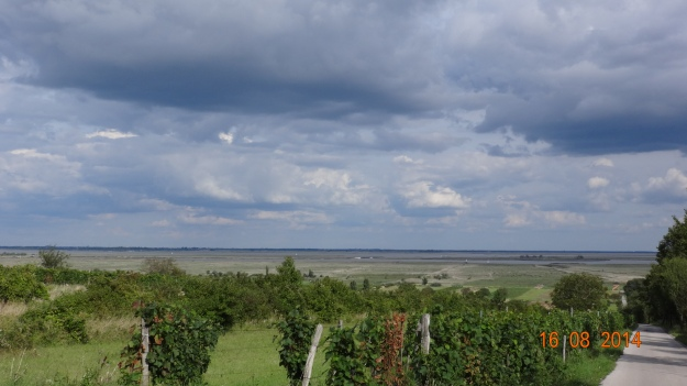 looking out accross the Neusiedler See and the reedbeds