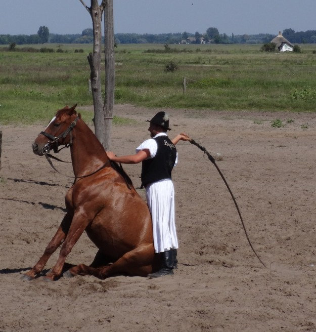 Ever seen a horse do that? They can seemingly get a horse to do anything. Hungarian horsemanship is renowned the world over.