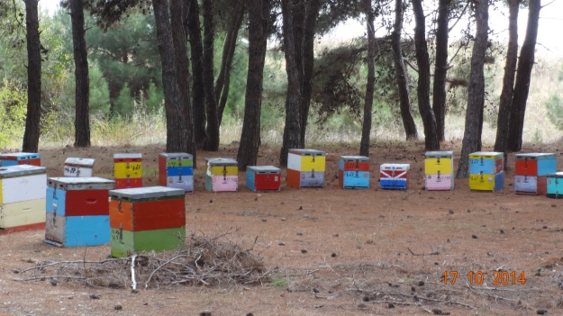 colourful beehives in the woods at Porto Lagos. There's a lot of beehives around. The Greeks like their honey!