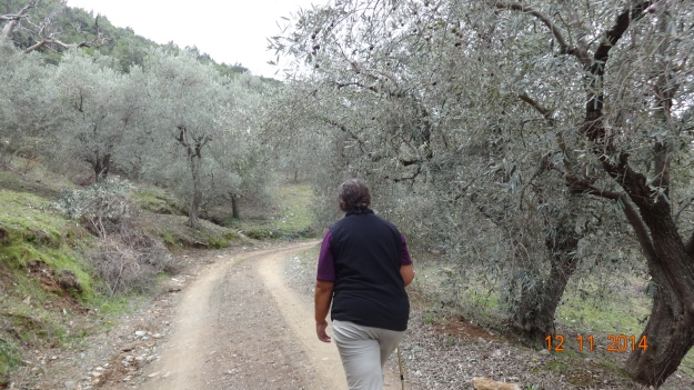 walking through the olive groves