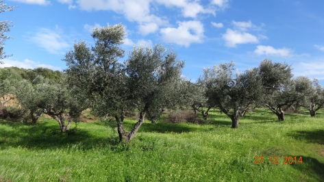 Out walking in the Olive groves on a perfect sunny day :)