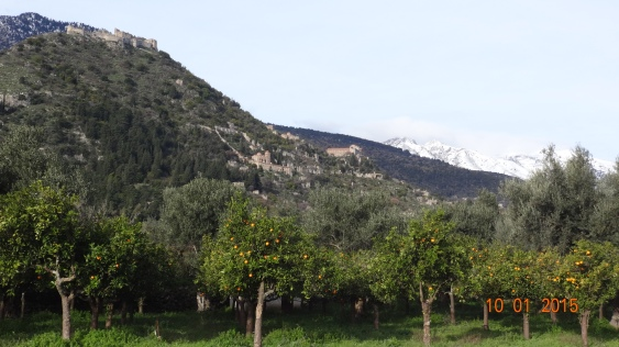 Ancient Mystras on the slopes high above, leading down to the orange groves below