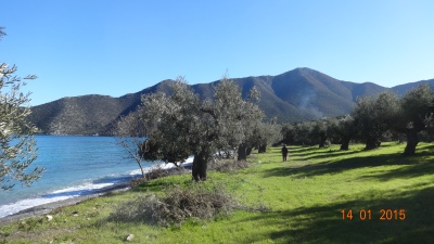 walking through the olive groves in the next bay..