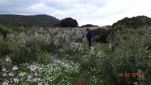 wild-flowers in abundance