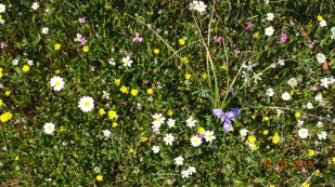 carpets of wild-flowers everywhere