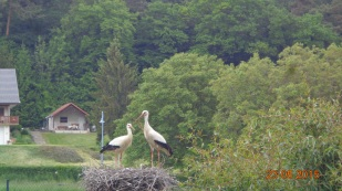 It's a popular nesting spot for storks - a welcome sign of spring in these parts.