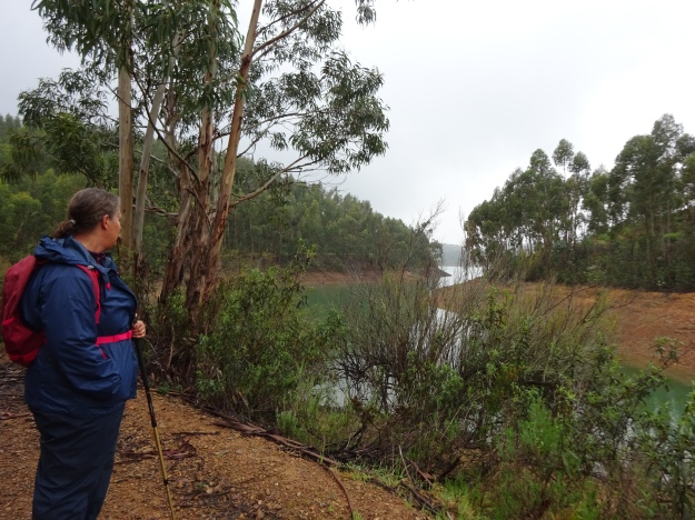 walking through the Eucalyptus forrests around the Brauvra Reservoir